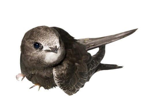 Yavru kuşların yardıma ihtiyaçları olabiliyor.