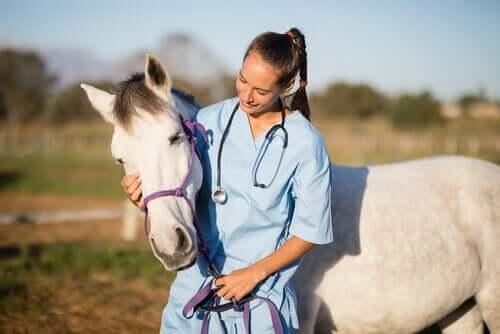 Atlarda Uyuz: Tedavisi Ve Bakımı