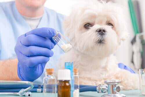 veteriner hekim ve beyaz köpek