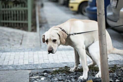 Köpeklerde Sindirim Problemleri: Tedavisi Ve Önlemler