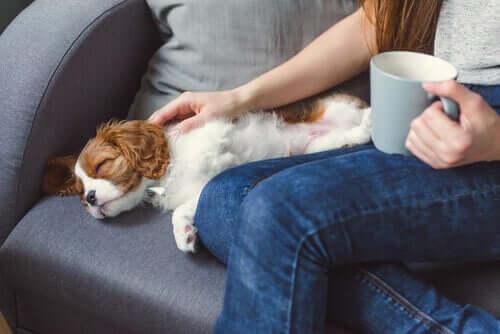 Köpeklerde Bilinçsizlik Hali ve Sebepleri
