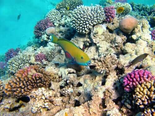 Mercan Resifleri ve Mikroskobik Algler Arasındaki Simbiyotik İlişki