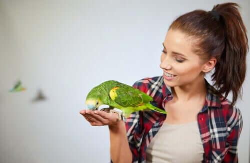 Papağanların Muhteşem Bilişsel Yetileri