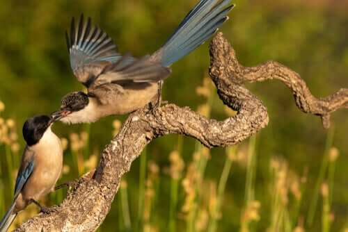 birbirlerini besleyen kuşlar