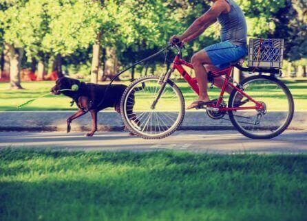 bisiklet süren adam ve köpek