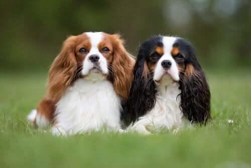çimlerde yan yana duran iki köpek