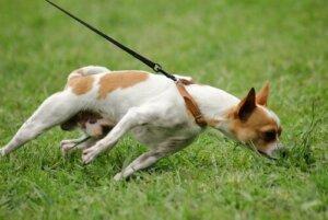 Dikkati dağılmış bir köpek