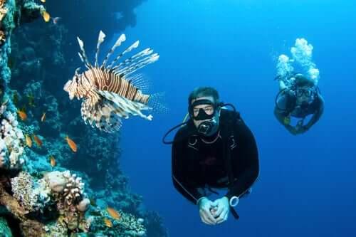 Egzotik balık türleri