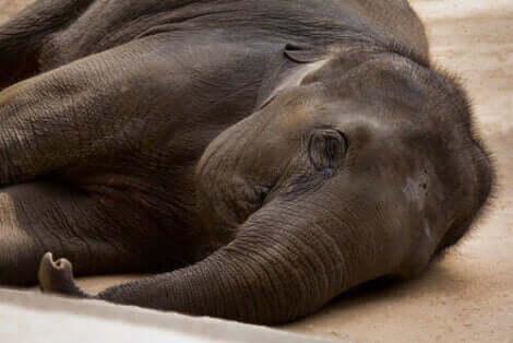 esaret altındaki filler