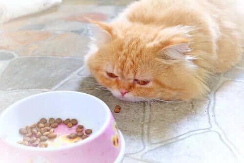Hasta Kediyle İlgilenmek: Diyet ve Beslenme