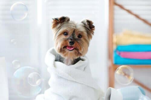 Evcil Hayvanınızı Islak Mendil İle Nasıl Temizlersiniz?
