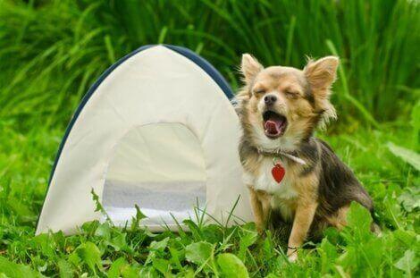 köpeğinizle kamp yapmak için ipuçları