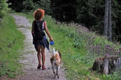 Köpeğinizle Kamp Yapmak İçin 5 İpucu