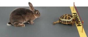 Kaplumbağa ve tavşan masalı, hayvan hikayeleri