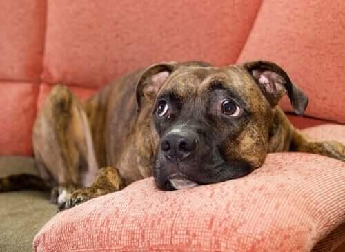 Köpeğiniz Diğer Köpeklerden Korktuğunda Ne Yapmalı?