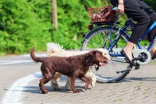 Köpeğinizle Bisiklet Sürerken Bu İpuçlarını Kullanın