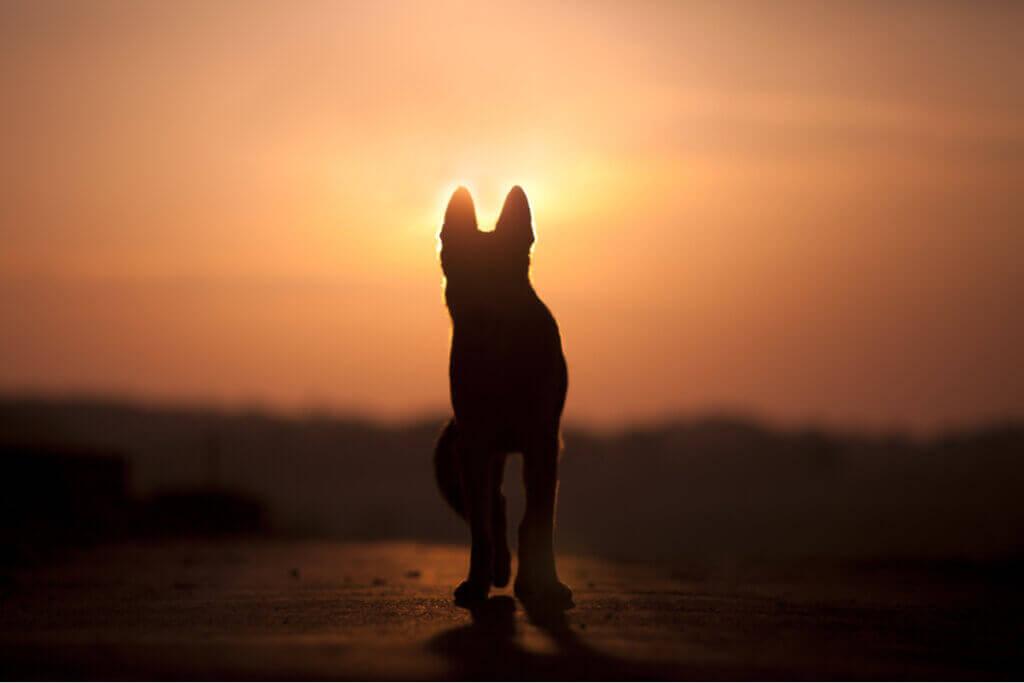 Köpekler Ölümü Anlayabilir Mi?