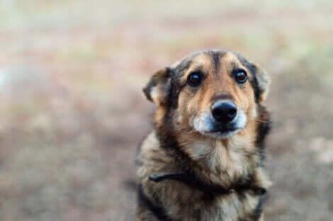 üzgün duran köpek