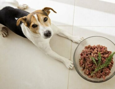 Köpekler Normalde Etçil Mi?
