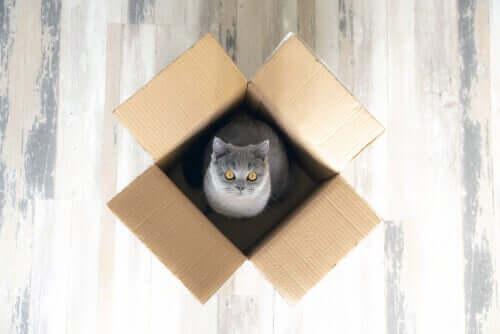 kutunun içinde oturan kedi