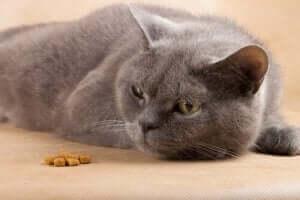 hasta kediyle ilgilenmek