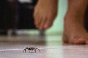 Örümceklerin zehri ve ölümcüllük oranı