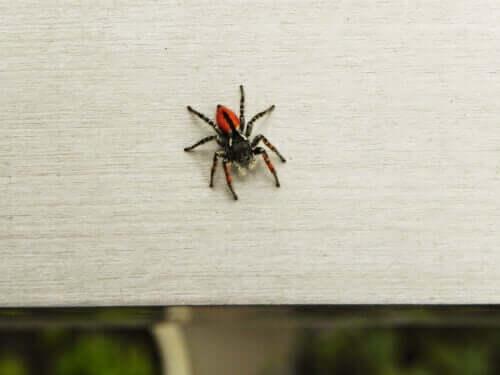 Örümcek Korkusu ile Nasıl Baş Edebilirsiniz?