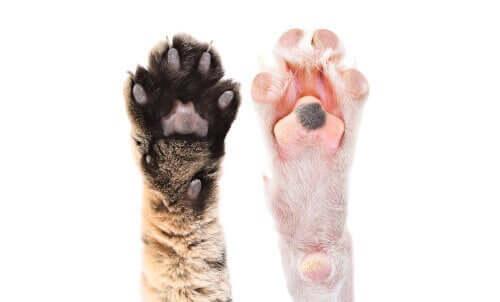 Hayvan Pati Yastığı Hakkında İlginç Gerçekler