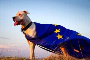 AB bayrağı giyen bir köpek