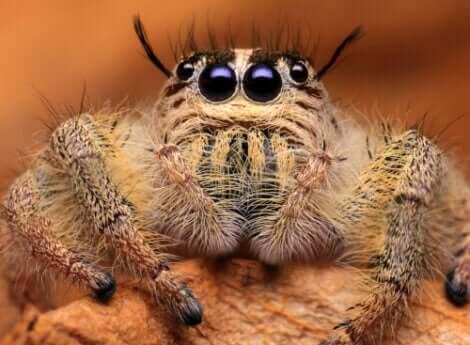 sevimli örümcek