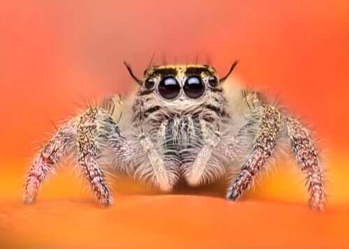 Hayvanlar Diyarındaki En Muhteşem Örümcekler