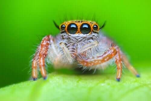 yeşil arka planda küçük örümcek ve en muhteşem örümcekler