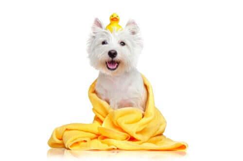 yeni yıkanmış köpek ve
