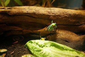 Teraryumda tırmanan bir böcek
