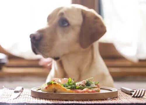 Vegan Diyeti Köpekler İçin Sağlıklı mı?