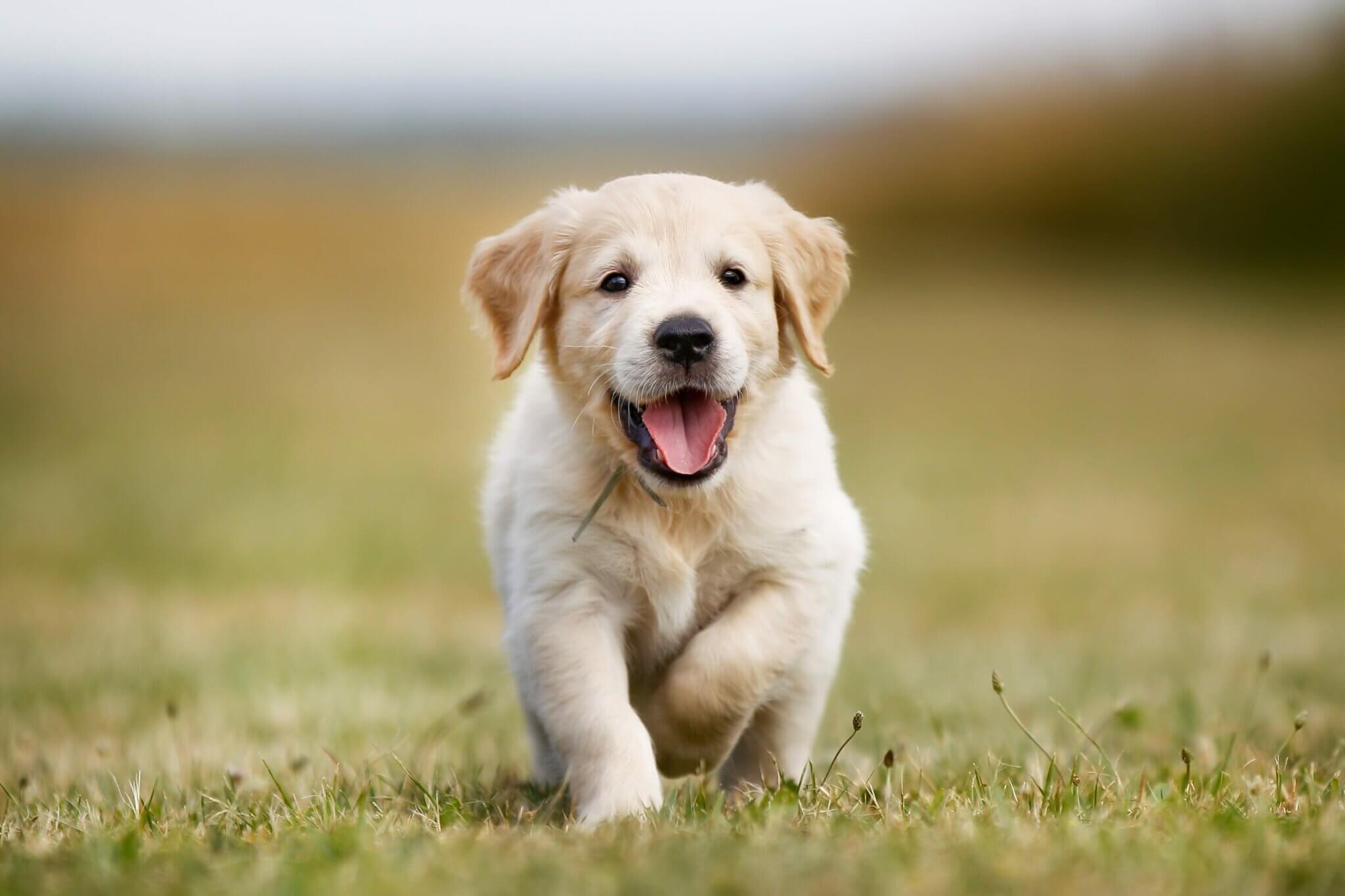 koşan yavru köpek