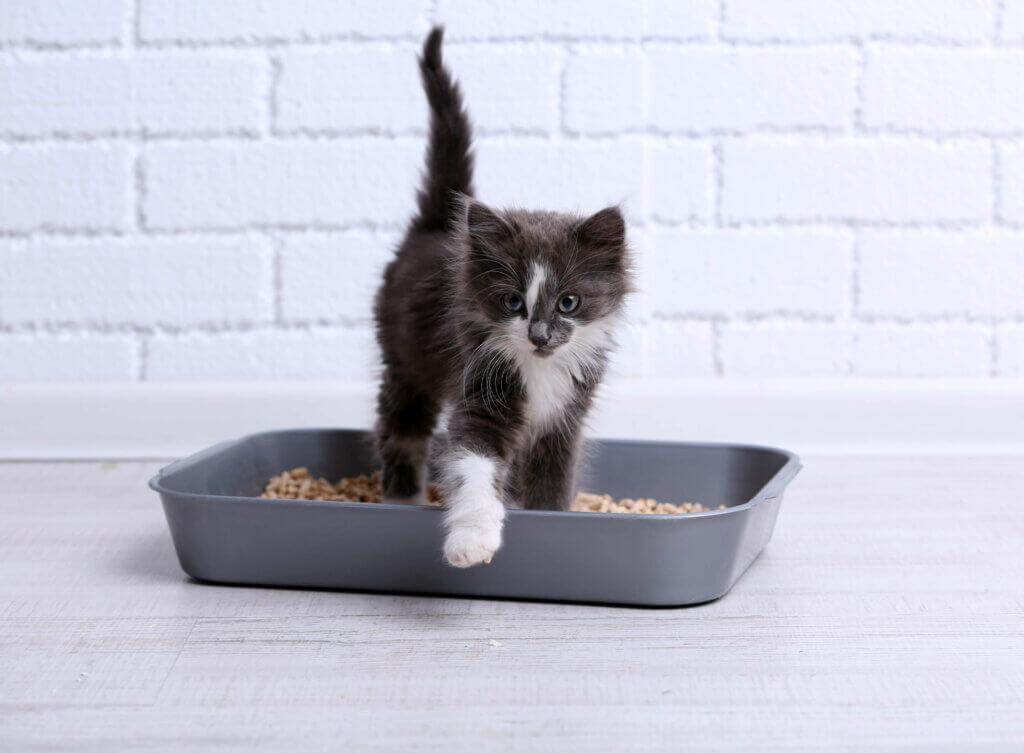Kediniz Kumu Dışına Dışkılamaya Başladıysa Ne Yapmanız Gerekir?