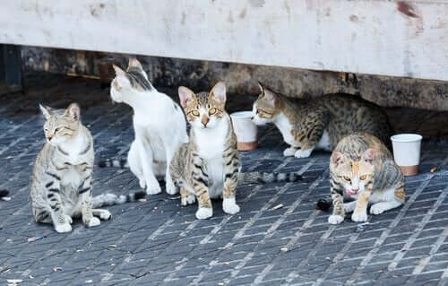 El Hamra'da bir grup kedi