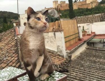 El Hamra Sarayı'nın Kedileri ve Hikayesi