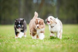 Havlayan Köpekler ve Onları Sakinleştirme Metotları