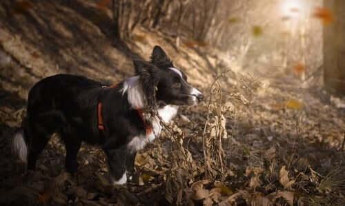 Dünyada Üzerindeki En Atletik 10 Köpek Cinsi