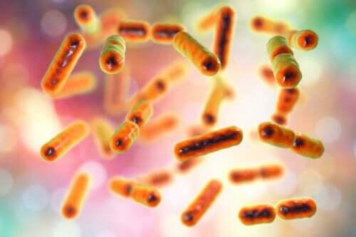 renkli bakteriler ve