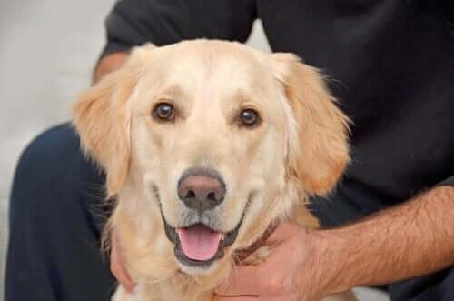Bekarlar İçin Köpek: Muhteşem Birleşim