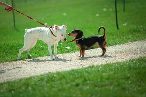 Köpeklerde Koklama: Köpekler Birbirilerini Neden Koklar?