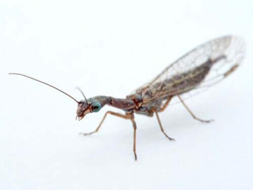 Haşere İle Mücadele İçin Kullanılan Böcekler