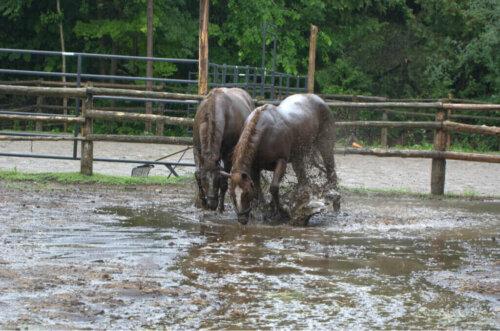 Selden Kurtarılan Atlar Doğum Yapıyor: Yaşamın Mucizesi