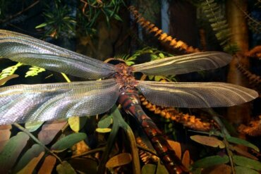 Bir Zamanlar Gezegenimizde Hüküm Süren Dev Böcek