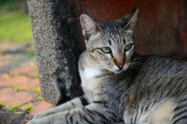 Evcil Kediler: Son Derece Bağımsız Hayvanlar