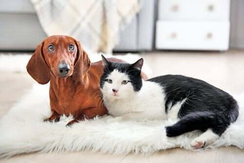 Bir Evcil Hayvanın Kaybı: Sensiz Aynı Olmayacak