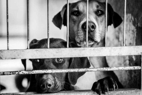 Yasaklanan evcil köpekler.